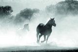 Arabian Horse 03.1 Eau de Parfum 50 ml_