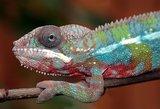 Chameleon Eau de Parfum 60 ml_